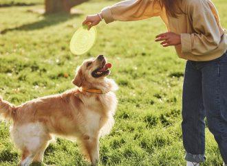 Hundespiele für unterwegs – Das E-Book von Cordula Weiß